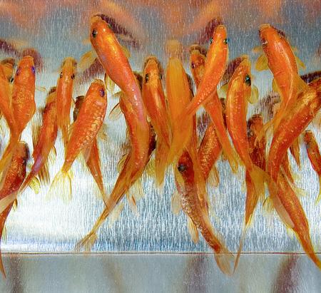 Riusuke Fukahor 3D Fish