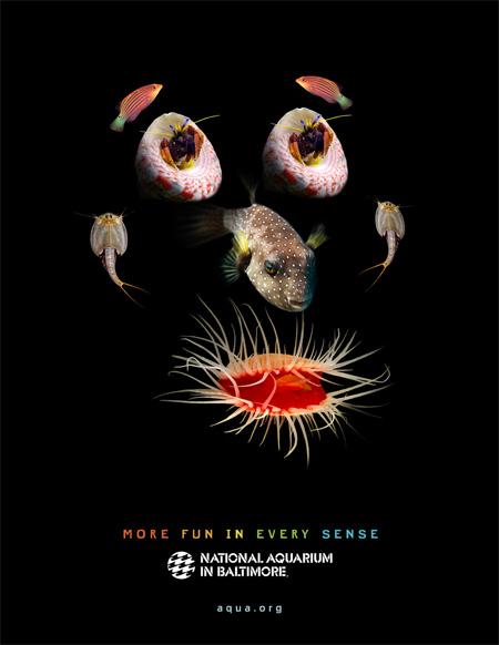 National Aquarium in Baltimore Ads 2