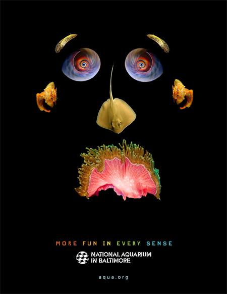 National Aquarium in Baltimore Ads 3