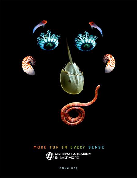 National Aquarium in Baltimore Ads 4