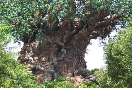 The Tree of Life at Disneys Animal Kingdom 2