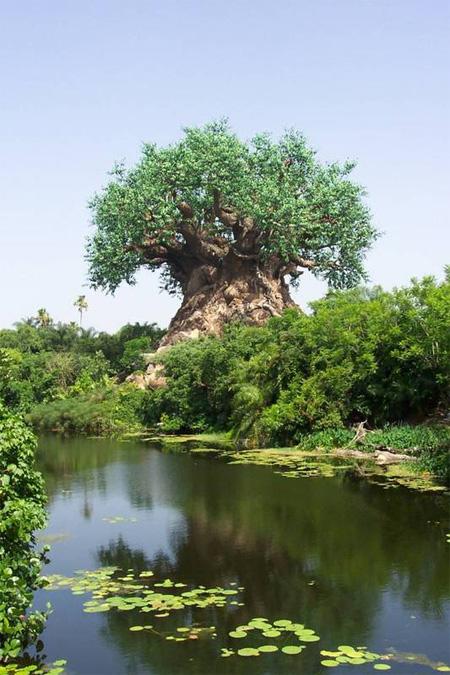 The Tree of Life at Disneys Animal Kingdom 21