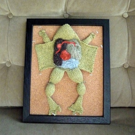 Knitted Frog Dissection