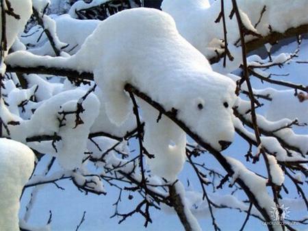 Snow Polar Bear