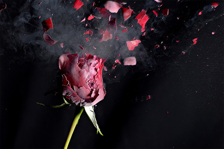 Petrified Rose by GS Imagery