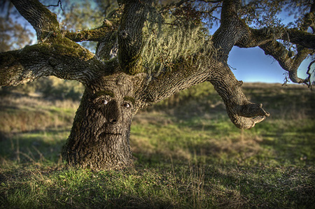 Father Tree by Josh Sommers