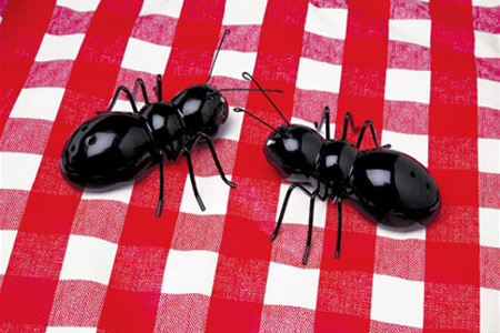 Ants Salt and Pepper Shakers