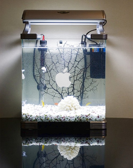 15 unusual and creative aquariums for Cool betta fish tanks