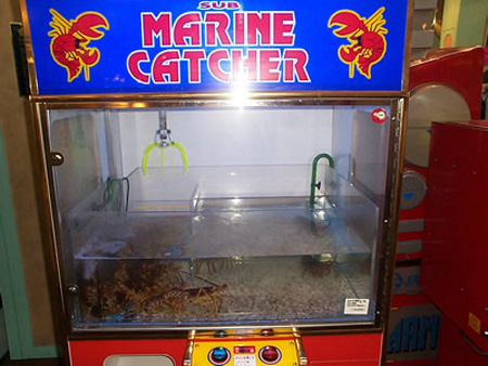 Live Lobsters Vending Machine
