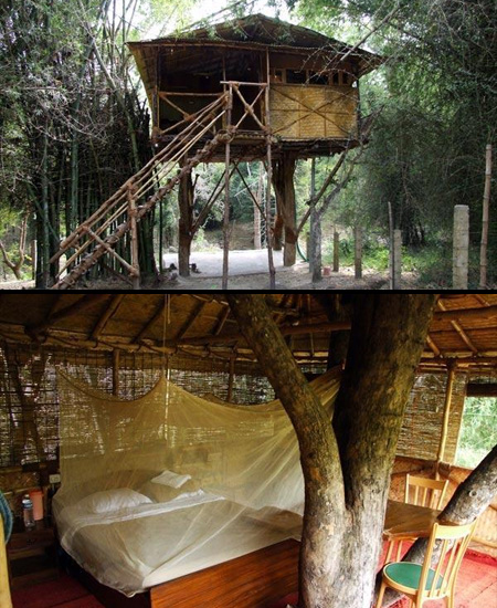 Treehouse Hotel in India|www.FunShad.com