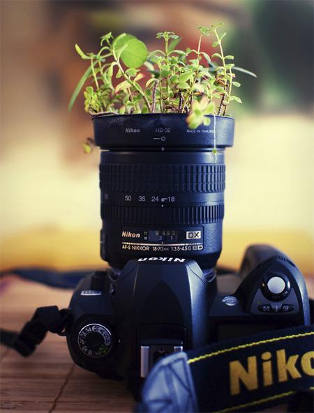 Nikon Camera Plant Pot
