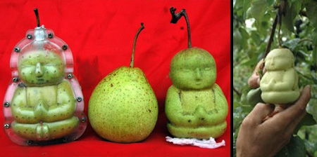 Buddha Shaped Pears from China