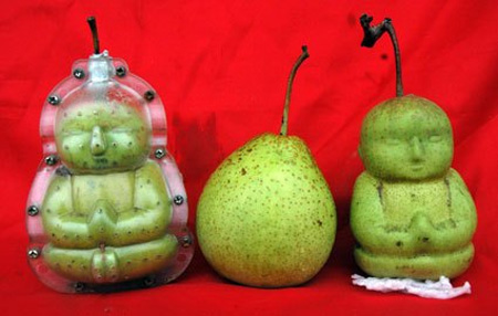 Farmer Grows Buddha Shaped Pears