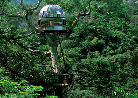 Beach Rock Tree House