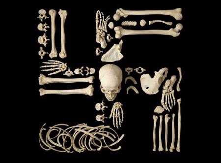 Human Bone Sculptures
