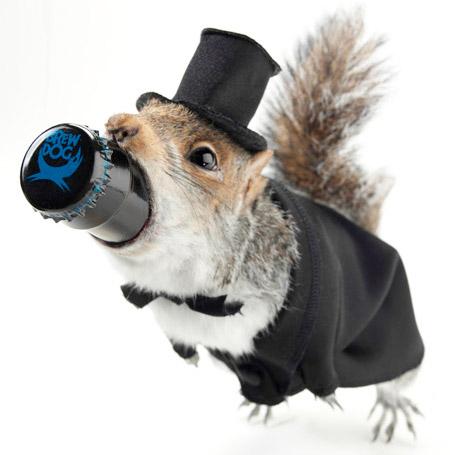 Squirrel Beer
