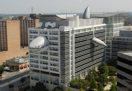 Shark Building
