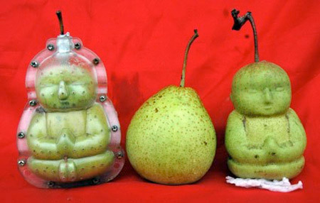 Buddha Pear