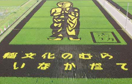 Rice Fields Art