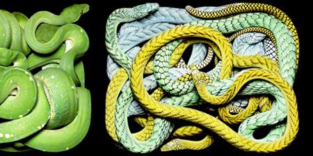 Beautiful Snake Photography