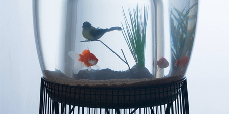 Bird Cage Aquarium