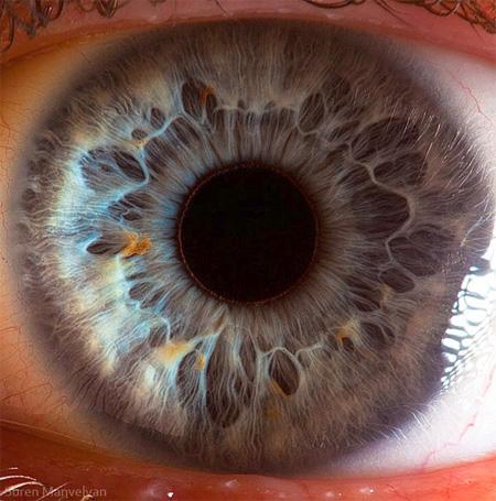 هنر عکاسی: عکسهای دیدنی از چشم انسان