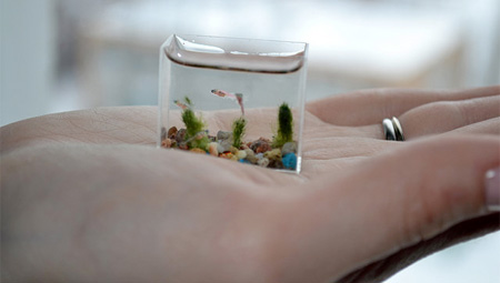 Smallest Aquarium