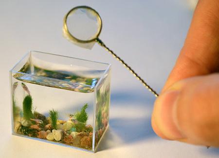 Micro Aquarium
