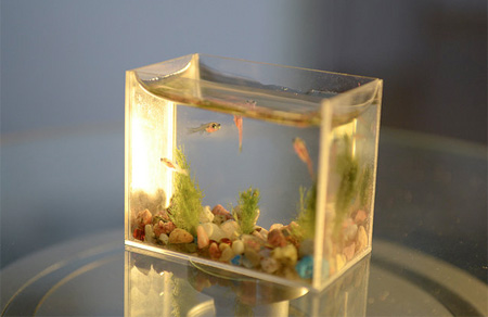 world s smallest aquarium