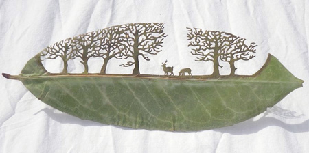 Beautiful Leaf Art