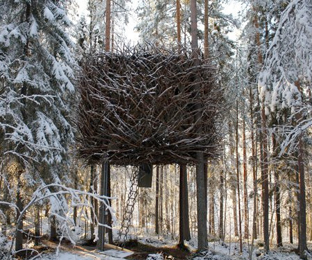 Bird Nest Tree House