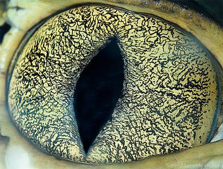 门维尔延的动物眼睛的特写镜头照片
