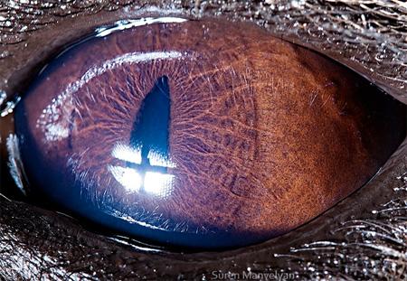 动物的眼睛