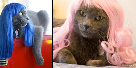 Wigs for Cats