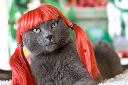 Cat in a Wig
