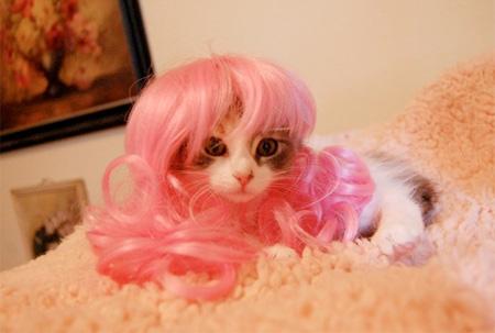 Картинки по запросу Кошки в париках Уникальная кошачья фотосессия