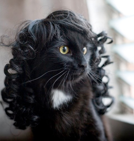 Kitty is a Wig