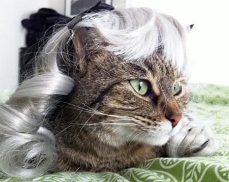 Kitten Wig