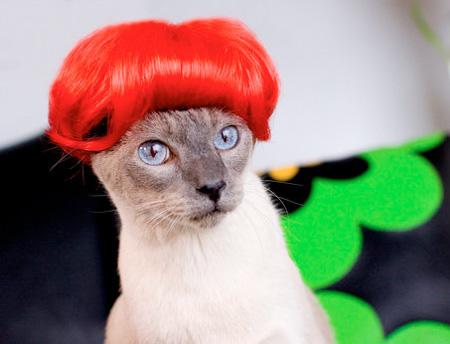 Kitten Wigs