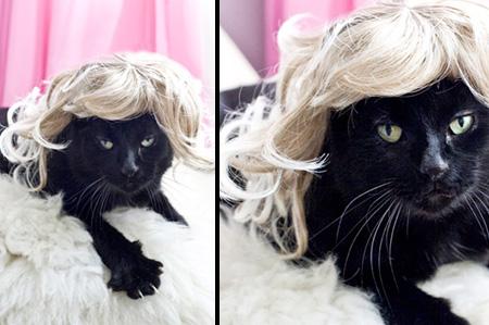 Cat Wigs