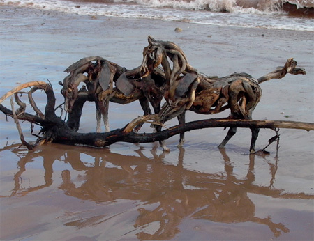 Heather Jansch Horses