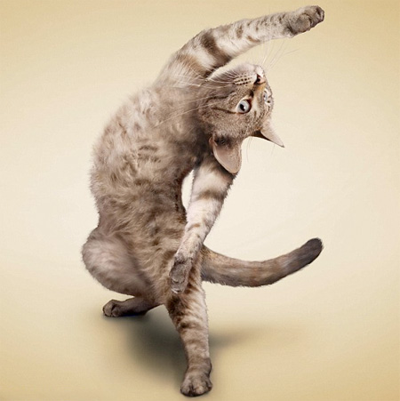 Adorable Cat Yoga