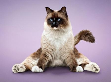Yoga Cats Book