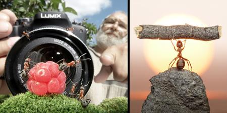 Creative Photos of Ants