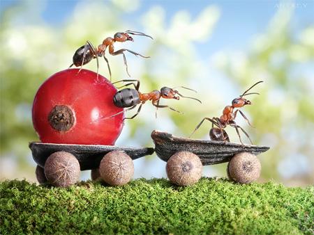 Ants Car