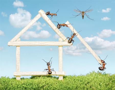 Ants House