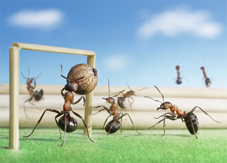 Ants Play