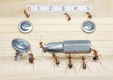 Ants Photography