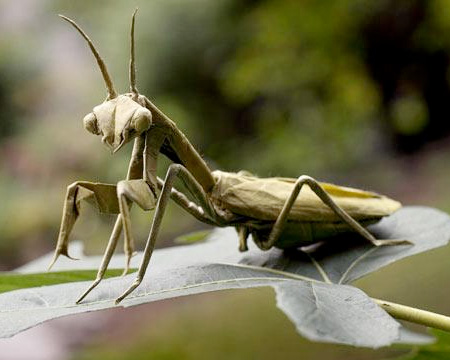 Paper Praying Mantis