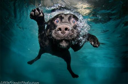 Diving Dog